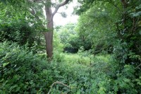 Images for 0.5 ACRES OF WOODLAND - NAILSEA