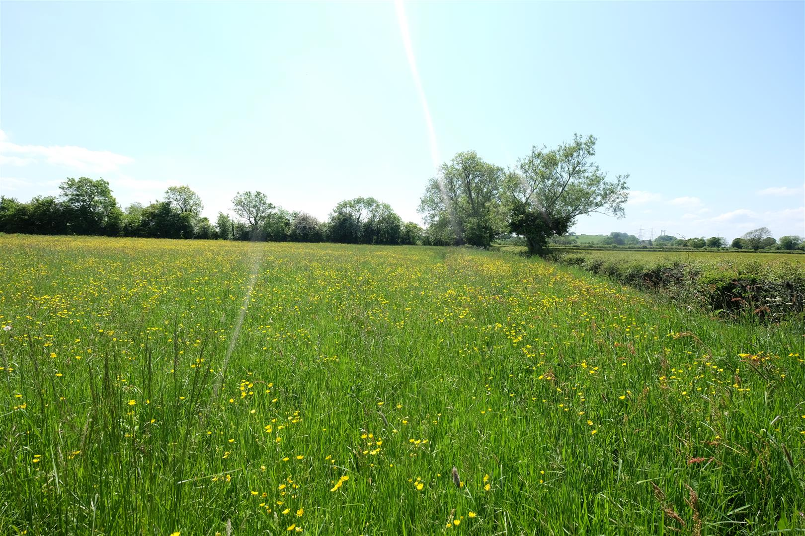 Images for 5 ACRE PADDOCK / WOODLAND - LITTLETON ON SEVERN EAID:hollismoapi BID:11